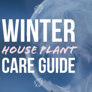 Ultimate Guide to Winter House Plant Care
