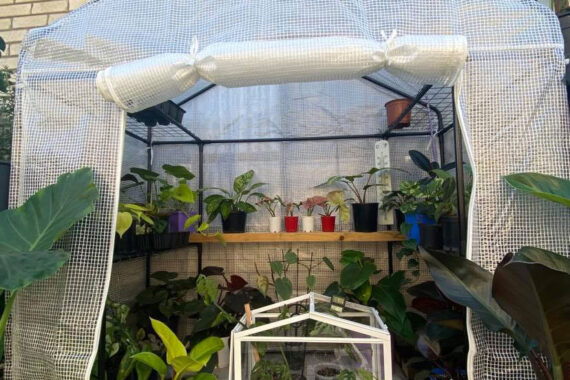 Keeping indoor plants in greenhouses