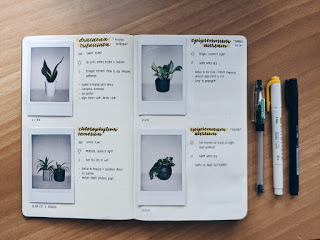 How to Start Your Own House Plant Journal