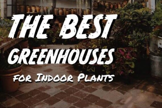 Best Greenhouses for Indoor Plants