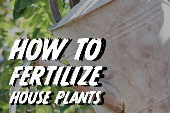 Fertilizing House Plants